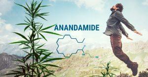 Anandamide (AEA)